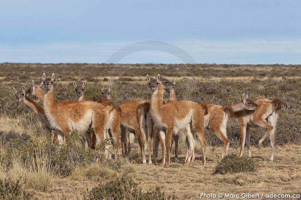Photo documentaire Patagonie Photo Documentary /   /  / Argentina / 2008-12-21, Photo © Marc Gibert / adecom.ca