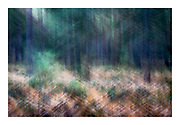 ICM intentional camera movement accentuating diagonals of bracken plants leading upwards and pine tree branches leading downwards in Black Butte area of Oregon