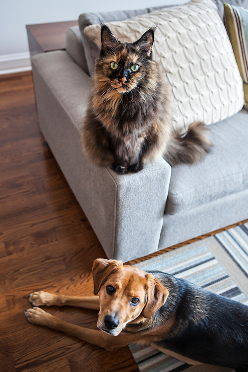 A dog and cat pose for the camera in a living room.