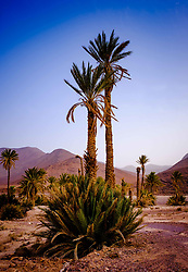 An oasis in the Moroccan desert near Foum El Oued<br /> <br /> (c) Andrew Wilson   Edinburgh Elite media