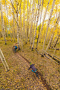 Nate Hills and Tom Sampson riding fall colors in Crested Butte, Colorado