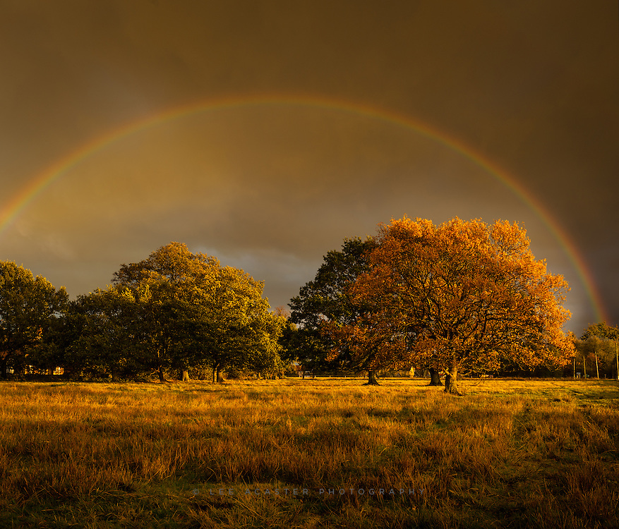 Had some beautiful lgiht this afternoon, ran across the road with an umbrella