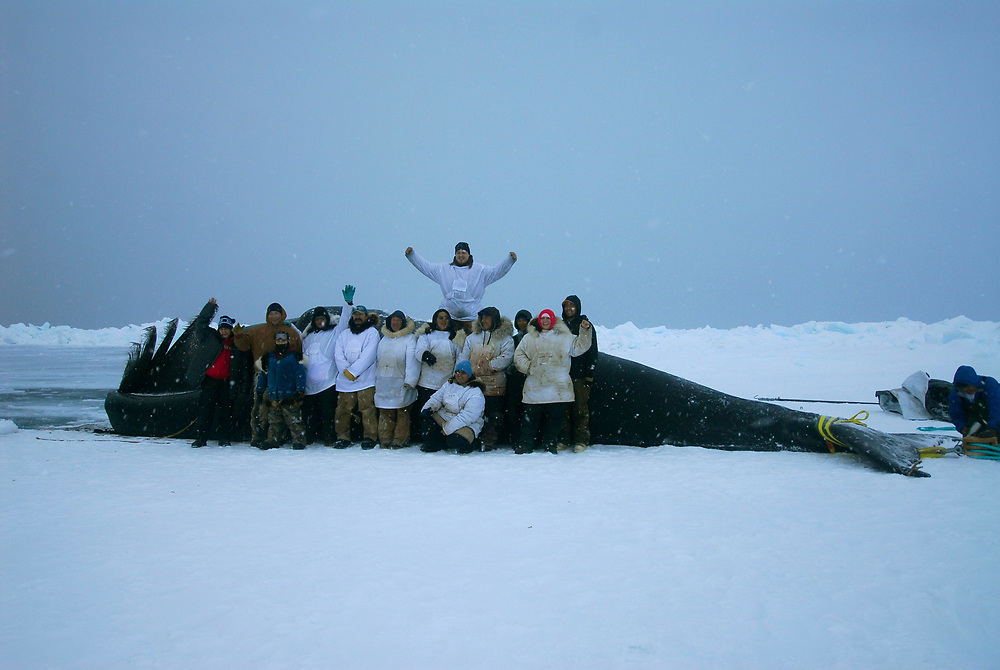 Barrow, Alaska. Simmeon Patkotak Crew poses for a picture with theirharvested whale.  May 2007.