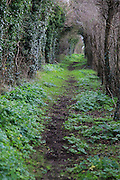 Path passing through tunnel formed by vegetation, Alderton, Suffolk, England, UK