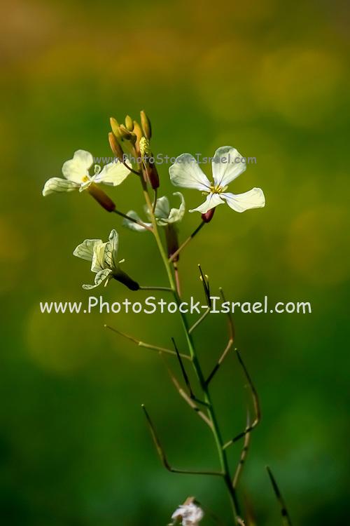 White flower growing in a field