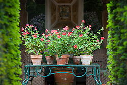 Display of Pelargonium 'Scarlet Unique' in terracotta pots in The Italian Garden at Hidcote Manor Garden