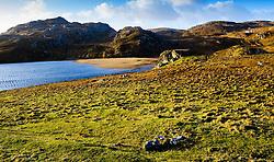 Loch Dhailbeag, Isle of Lewis, Outer Hebrides, Scotland<br /> <br /> (c) Andrew Wilson | Edinburgh Elite media