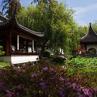 USA, California, San Marino. The Huntington Library Chinese Gardens.