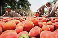 Migrant peach pickers, from left, Muaro Medina, 25, Filiberto Percastre, 26, his brother, Juan Percastre, 28, and Maximiliano Rubio, 33, hop off of a tractor pulled trailer as they head to the next peach orchard at Titan Farms