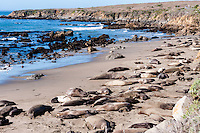 United States, California. San Simeon is home to a large elephant seal rookery.