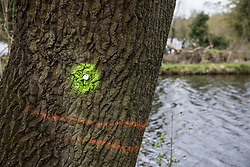 Harefield, UK. 6th April, 2021. A tree marked with yellow paint adjacent to an area alongside the Grand Union Canal already cleared of trees for the HS2 high-speed rail link. Thousands of trees have already been felled in the Colne Valley where HS2 works will include the construction of a Colne Valley Viaduct across lakes and waterways and electricity pylon relocation.