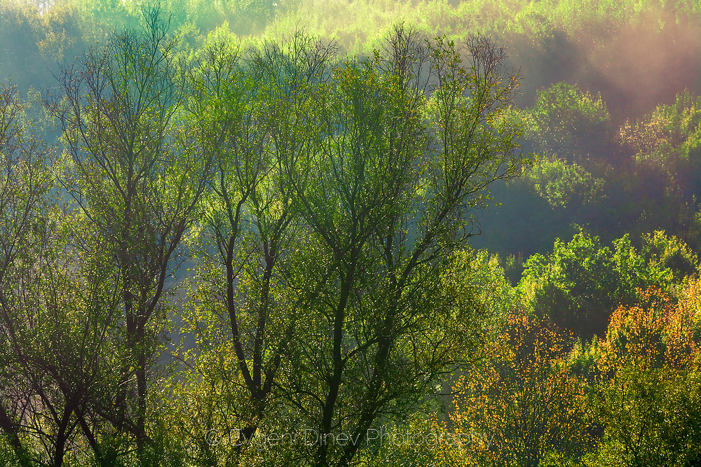 Sunny spring forest after rain