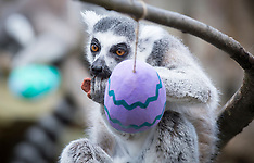Easter at ZSL London Zoo 29th March 2018