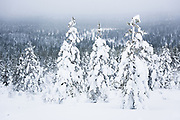 Three and Many | Saariselkä, Finland