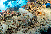 The wrecks of Truk Lagoon : IJN Fumizuki