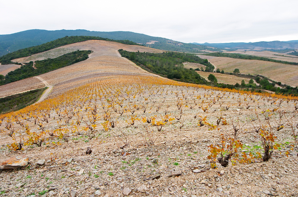 Chateau des Erles. In Villeneuve-les-Corbieres. Fitou. Languedoc. Vines trained in Gobelet pruning. Terroir soil. Spectacular view vista over the hilltop vineyard dominated by shist. France. Europe. Schist slate soil.