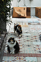 Ernest Hemingway House in Key West, Florida. Home to the descendants of his six-toed cats.