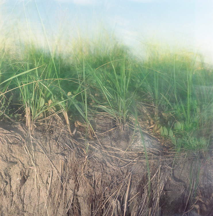 Dune grass lit at sunset