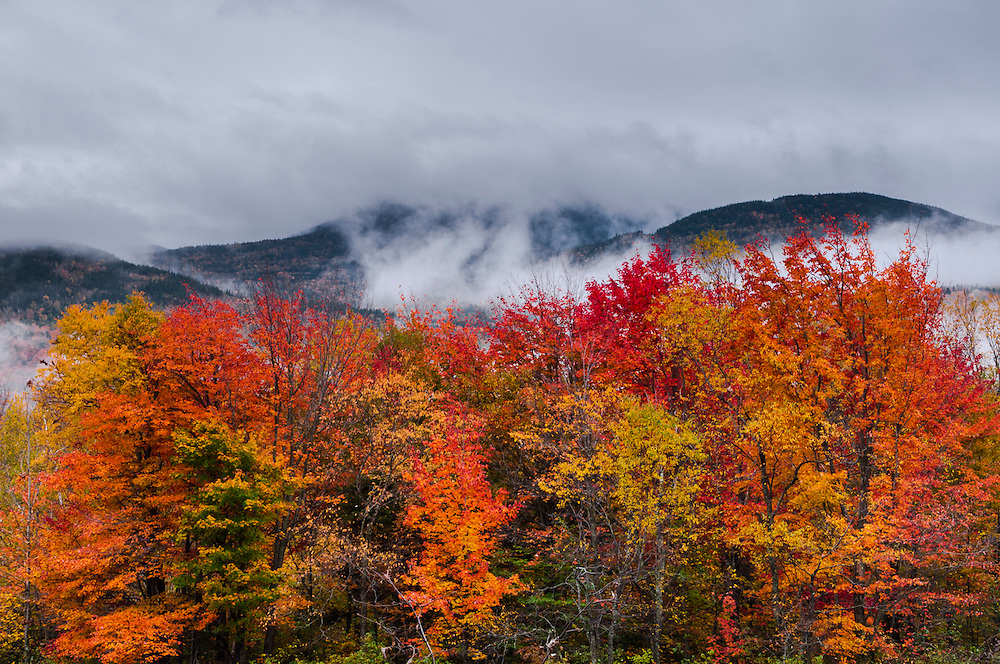 Fall colors of maple trees, view to fog & clouds hanging on Presidential Range, moody fall scene, Randolph, NH