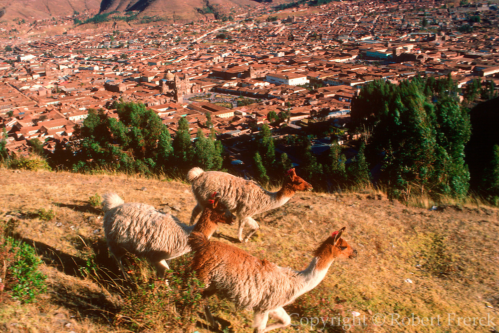 PERU, HIGHLANDS, CUZCO city with Plaza de Armas and llamas