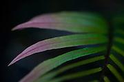 Santana do Riacho_MG, Brasil...Detalhe de uma planta do Alto Palacio no Parque Nacional da Serra do Cipo...Detail of a plant in Alto Palacio in the Serra do Cipo National Park....Foto: JOAO MARCOS ROSA / NITRO