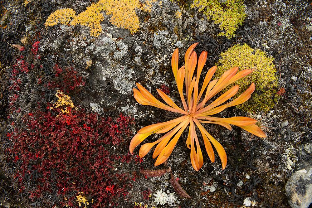 Vegetation at 4800 m altitude in the Nepal Himalaya. Photo © robertvansluis.com