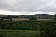 Rows of hops being grown on farmland in Stoke Edith, Herefordshire, United Kingdom. Hops are the flowers of the hop plant Humulus lupulus. They are used primarily as a bittering, flavouring, and stability agent in beer, to which, in addition to bitterness, they impart floral, fruity, or citrus flavours and aromas.