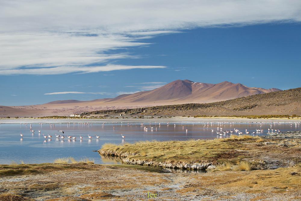 Flamingos in the water at Salar de Tara, Atacama Desert. Chile, South America
