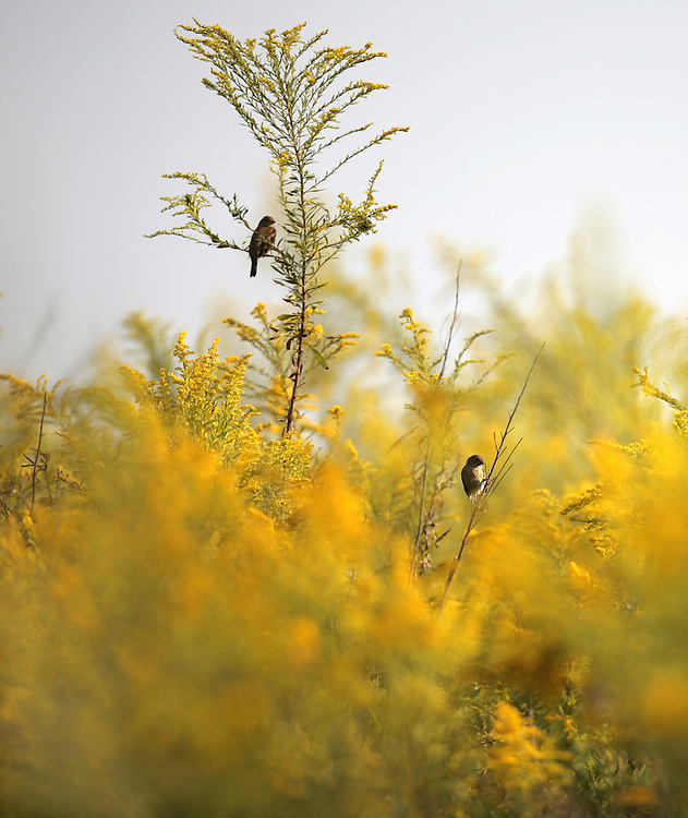 PHOTO BY CHRIS GRANGER..Monday October 1, 2007..Birds hang out in a area that has been designated as a regrowth area at Tensas National Wildlife Refuge.