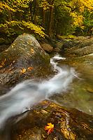 Autumn foliage along Texas Brook, Hancock, Vermont