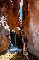 Hikers climbing a log ladder in the slot canyon, Kanarra Creek Falls, near Cedar City, Utah USA.