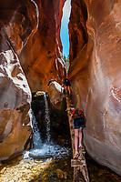 Hikers climbing a log ladder in the slot canyon, Kanarra Creek Falls, near Cedar City, Utah USA.