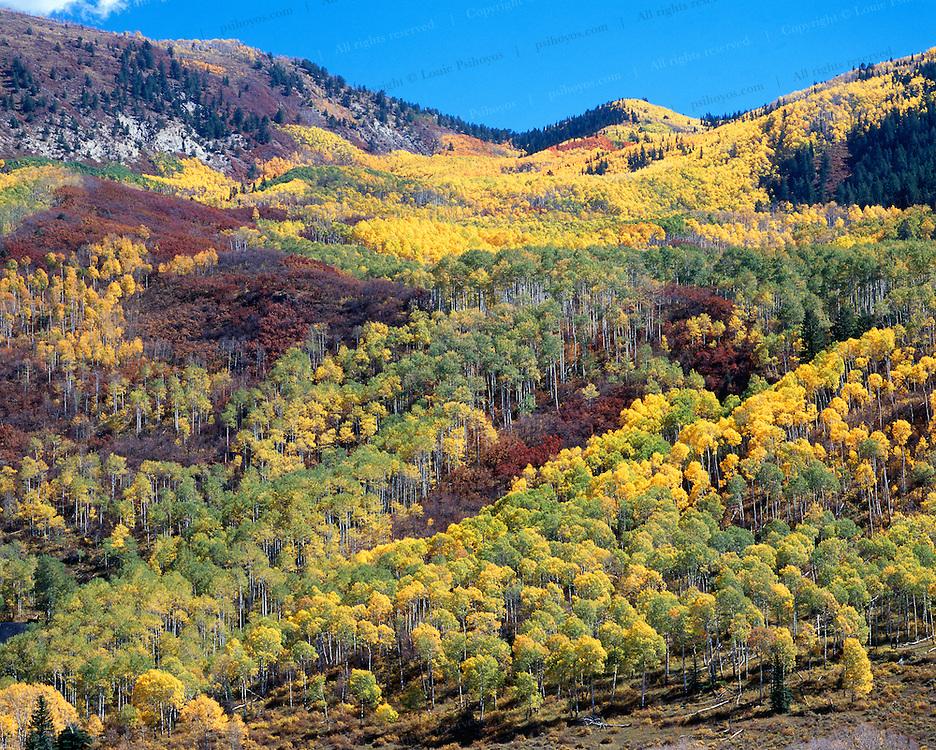Fall colors near Durango, Colorado