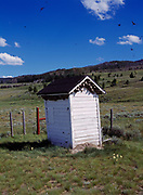 Dozens of Cliff Swallow nests beneath the eaves of the outhouse at Lakeview Cemetery, Centennial Valley, Montana.