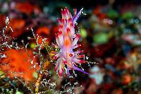 Neon Nudibranch
