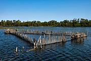Artesanal fish trap<br /> Eastern Madagascar<br /> MADAGASCAR