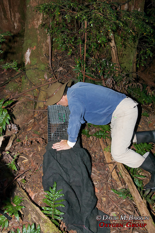 David Lindenmayer With Mountain Brushtail Possum In Trap