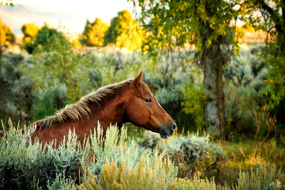 Horse and sage on the mesa, Arroyo Seco, New Mexico