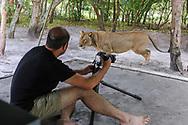 """Impressionen aus dem Liuwa Plain Nationalpark in Sambia mit der """"Lady Liuwa"""", einer Löwin, die den Kontakt zu den Menschen im Camp sucht."""