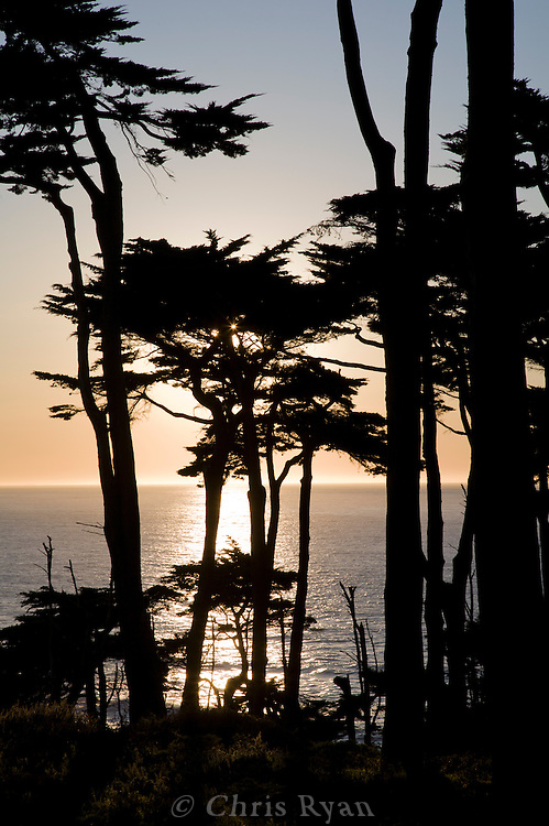 Cypress trees silhouetted by sunset over Pacific, Lands End, San Francisco, California