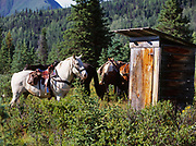 """Horse (""""Jake"""") patiently waiting for his rider by outhouse at King's Cabin, Caribou Creek, Talkeetna Mountains, Alaska."""