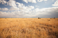 A stunning African landscape in Loisaba Conservancy, Kenya