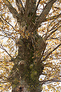close up of an old tree trunk during late autumn season