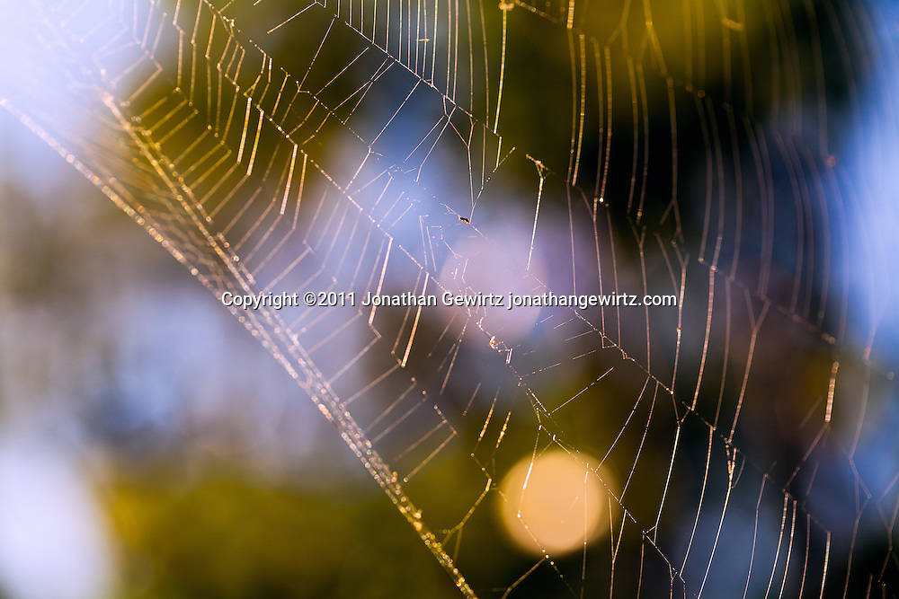 A spider's web in the Florida Everglades. WATERMARKS WILL NOT APPEAR ON PRINTS OR LICENSED IMAGES.
