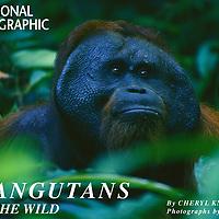 Nat Geo: Orangutans In The Wild