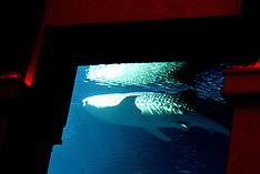 Dubai Atlantis 050314