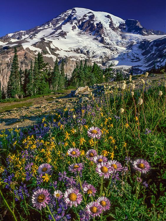 Mount Rainier and Paradise Meadow, summer wildflowers, Mount Rainier Natioinal Park, Washington, USAbb