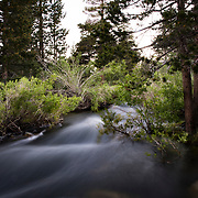 The Eastern Sierra's towns of Mammoth Lakes, June Lakes and surrounding areas weathered a historical and record producing winter snowfall that carried over into the summer. Mammoth Creek crested its banks and was flowing at rates seldom seen prior.