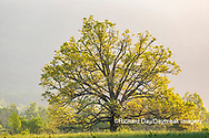 66745-04811 Sunrise in Cades Cove in spring Great Smoky Mountains National Park TN