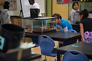 """Students study reptiles before class at Lorenzo De Zavala Environmental Science Academy in Grand Prairie, Texas on October 7, 2016. """"CREDIT: Cooper Neill for The Wall Street Journal""""<br /> PUBLICS"""
